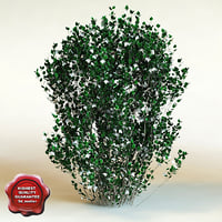 3d model of shrub Philadelphus X Virginalis 'Natchez'